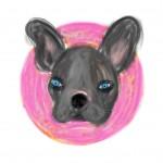 My gay french bulldog is psychic